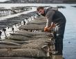 DLAL FEAMP : le Pays de Brest a déposé sa candidature