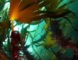 Assemblée annuelle du Cluster algues Pays de Brest